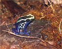 neon blue frog sitting on a rock